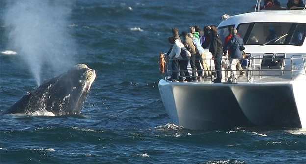 africa-whales22.jpg