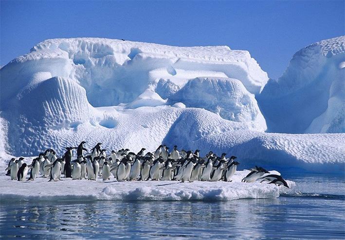 antarctida_25.jpg