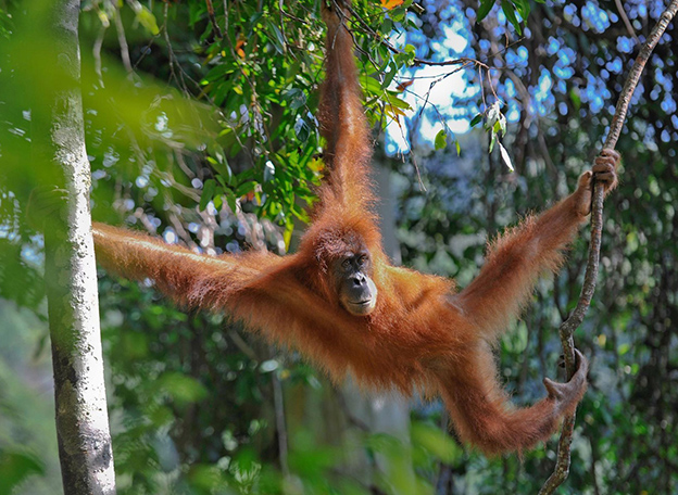 indonesia_borneo-monkey22.jpg